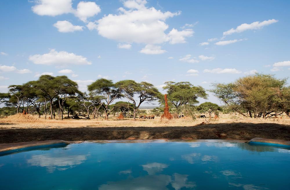 swala-camp-tanzania-pool